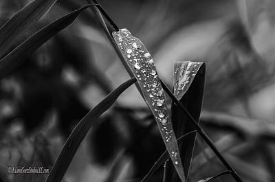 Red Photograph - Fall Leaves With Dew by LeeAnn McLaneGoetz McLaneGoetzStudioLLCcom