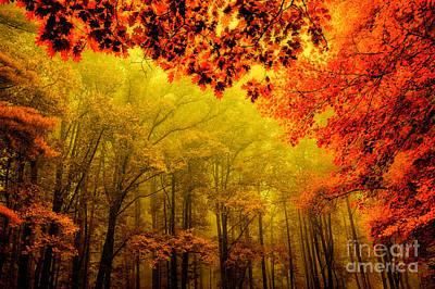 Fall On Steroids - Blue Ridge Parkway Print by Dan Carmichael