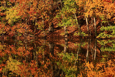 Of Autumn Photograph - Fall Reflections by Karol Livote