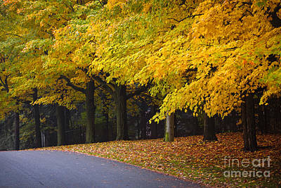 Asphalt Photograph - Fall Road And Trees by Elena Elisseeva