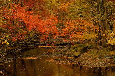 Fall Photograph - Fall Stream by Gerri MacIlvane