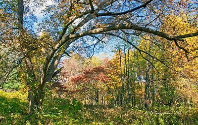 Print featuring the photograph Fall Tapestry Of Colors And Textures by A Gurmankin