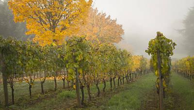Fall Vineyard Colors Print by Jean Noren
