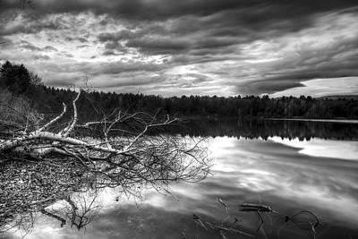 Mirror Photograph - Fallen Birch Tree by Ivan Slosar