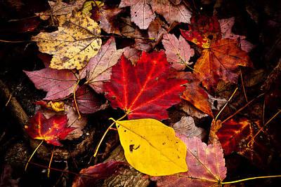 Forest Floor Photograph - Fallen by Karol Livote