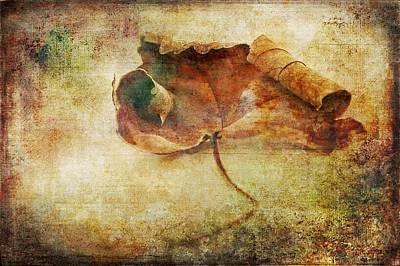 Fallen Leaf Photograph By Anne Macdonald