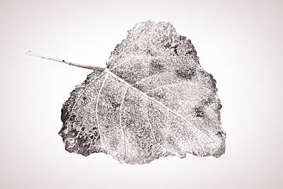 Fallen Leaf On Water Photograph - Fallen Leaf In Bwt by Greg Jackson