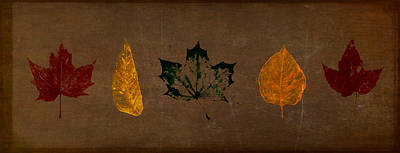 Leaf Stencil Digital Art - Fallen Leaves by Eduardo Tavares