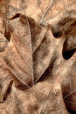 Dried Photograph - Fallen Leaves I by Tom Mc Nemar