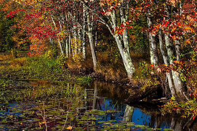 Of Autumn Photograph - Falling Into The Colors by Karol Livote