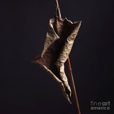 Outlook Photograph - Fallopia Japonica by Bernard Jaubert