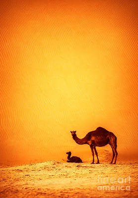 Camel Photograph - Family Of Wild Camels by Anna Omelchenko