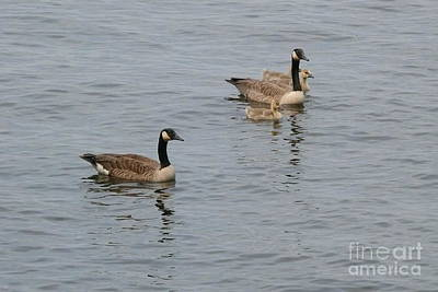 Family Outing - Canada Geese Original by Betsy Cotton
