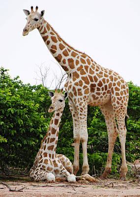 Giraffe Photograph - Family Photo by Kayne  Johnson