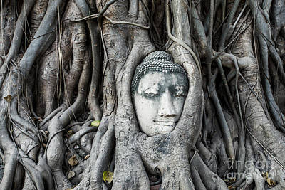 Thailand Photograph - Famous Buddha Head Entwined In Tree Roots - Ayutthaya - Thailand by Matteo Colombo