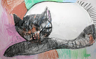 Turkish Van Cat Drawing - Fantasia Sleeping by Anita Dale Livaditis