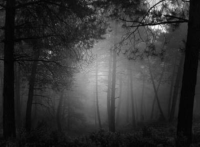 Mistery Photograph - Fantasy Forest by Guido Montanes Castillo