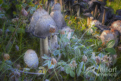 Mushroom Photograph - Fantasy In Miniature by Dan Jurak