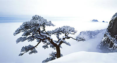 Winter-landscape Photograph - Fare-well Pine Tree by King Wu