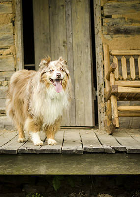 Log Cabin Photograph - Farm Dog by Heather Applegate