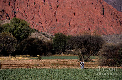 Farmer In Field In Northern Argentina Print by James Brunker
