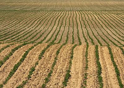 Jim Nelson Photograph - Farmer's Field by Jim Nelson