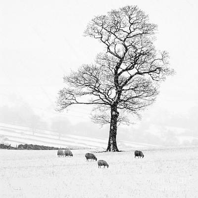 Flora And Fauna Photograph - Farndale Winter by Janet Burdon
