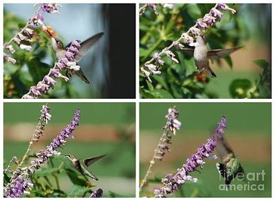 Hummingbird Photograph - Fast Food by GD Rankin