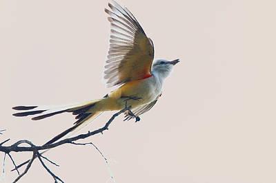 Flycatcher Digital Art - Fast Get Away by Roy Williams
