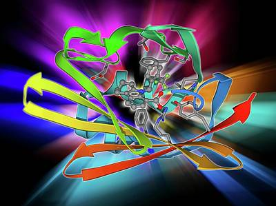 Molecular Structure Photograph - Fatty Acid Binding Protein And Inhibitor by Laguna Design