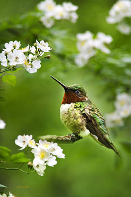 Fauna And Flora - Hummingbird With Flowers Print by Christina Rollo