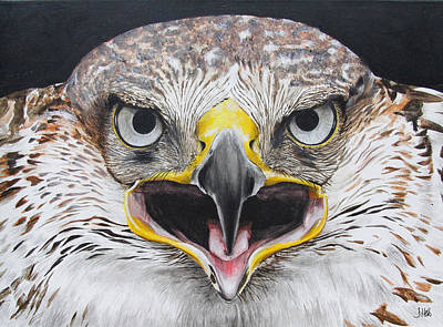 Buzzard Painting - Fearless Freddie by John Hebb