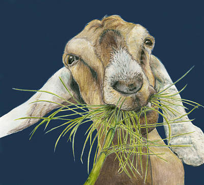 Goat Drawing - Feast by Tracy Anderson