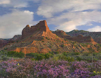 Feather Dalea Flowering Caprock Canyons Print by Tim Fitzharris