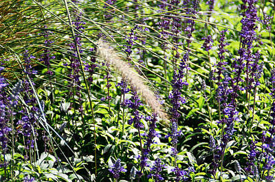 Floral Photograph - Feather In The Crowd by Aimee L Maher Photography and Art Visit ALMGallerydotcom