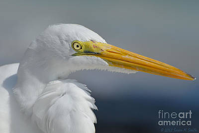 Susan M. Smith Photograph - Feathered Friend by Susan Smith