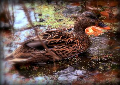 Wild Ducks Photograph - Feathers In Autumn by Karen Wiles