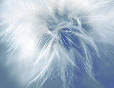 Blueish Photograph - Feathers by Janet Pancho Gupta