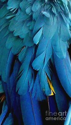 Feathers Of The Macaw Parrot Print by Gail Matthews