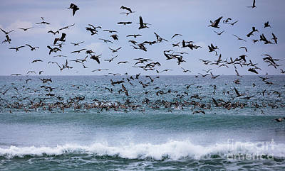 Frenzy Photograph - Feeding Frenzy by David Millenheft