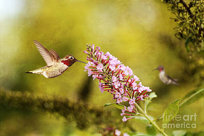 Butterfly In Flight Photograph - Feeding Hummer by Darren Fisher
