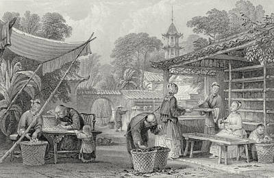 Feeding Silkworms And Sorting Cocoons Print by Thomas Allom