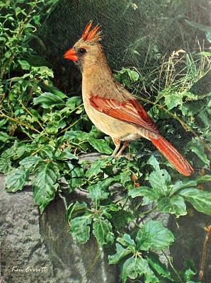 England Artist Painting - Female Cardinal  by Ken Everett