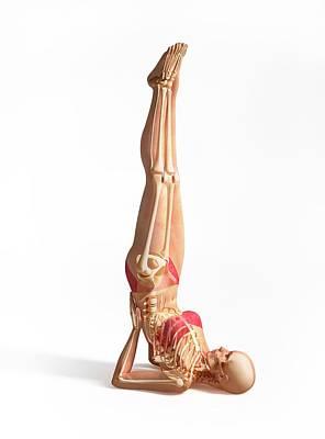 Gymnast Photograph - Female Musculoskeletal System by Leonello Calvetti