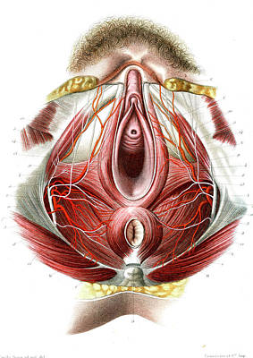 Female Perineum Print by Collection Abecasis