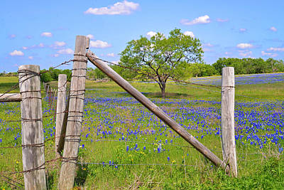 Fenced-in Beauty Print by Lynn Bauer