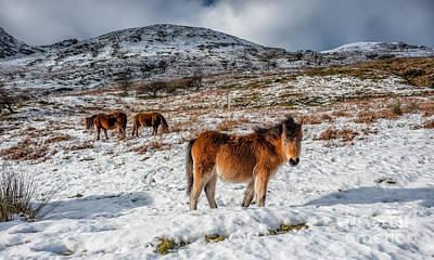 Snow Digital Art - Feral Horse by Adrian Evans