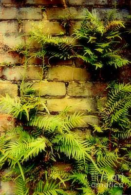 Ferns Of Mortar  Print by Michael Hoard