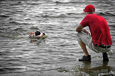 Pitbull Photograph - Fetch by Steven  Michael