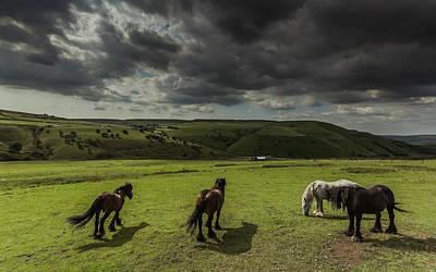 Pasture Scenes Photograph - Fetlocked Friends by Chris Fletcher